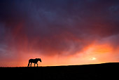 HOR 01 KH0095 01