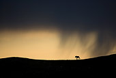 HOR 01 KH0096 01