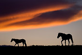 HOR 01 KH0097 01