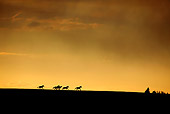 HOR 01 KH0098 01