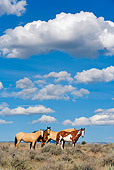 HOR 01 KH0101 01