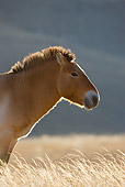 HOR 01 KH0110 01