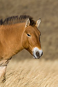 HOR 01 KH0111 01