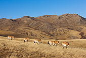 HOR 01 KH0133 01
