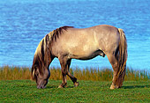 HOR 01 KH0136 01