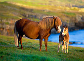 HOR 01 KH0138 01
