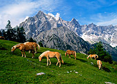 HOR 01 KH0142 01