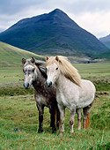HOR 01 KH0150 01