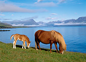 HOR 01 KH0152 01