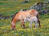 HOR 01 KH0153 01