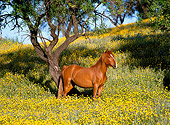 HOR 01 KH0156 01