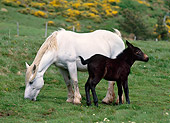 HOR 01 KH0159 01
