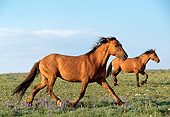 HOR 01 LS0001 01