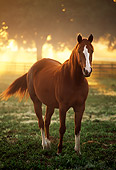 HOR 01 LS0004 01