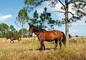 HOR 01 LS0006 01