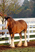 HOR 01 LS0008 01