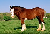 HOR 01 LS0009 01