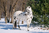 HOR 01 LS0010 01