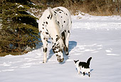 HOR 01 LS0011 01