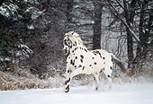 HOR 01 LS0012 01