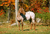 HOR 01 LS0013 01