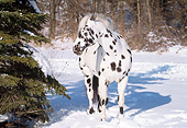 HOR 01 LS0014 01