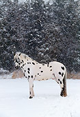 HOR 01 LS0015 01