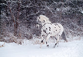 HOR 01 LS0016 01
