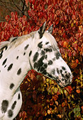 HOR 01 LS0019 01