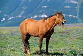 HOR 01 LS0022 01