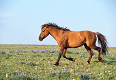 HOR 01 LS0023 01