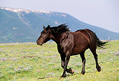 HOR 01 LS0024 01