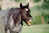 HOR 01 LS0027 01