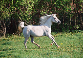 HOR 01 LS0029 01
