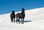 HOR 01 LS0030 01