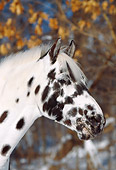 HOR 01 LS0031 01