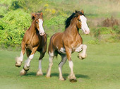 HOR 01 MB0001 01