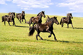 HOR 01 MB0004 01