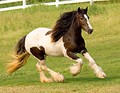 HOR 01 MB0009 01