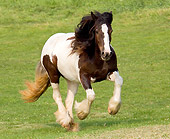 HOR 01 MB0010 01