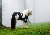 HOR 01 MB0014 01