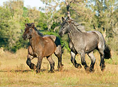 HOR 01 MB0018 01