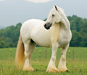 HOR 01 MB0021 01