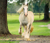 HOR 01 MB0023 01