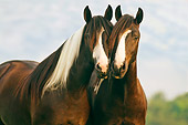 HOR 01 MB0027 01