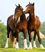 HOR 01 MB0028 01