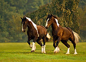HOR 01 MB0029 01