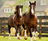 HOR 01 MB0030 01