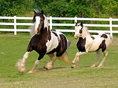 HOR 01 MB0031 01