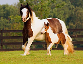 HOR 01 MB0032 01